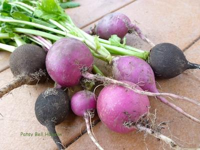 Black radish, Purple Plum radish.