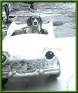 dogdrivingcar