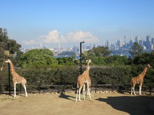 View from Taronga Zoo...