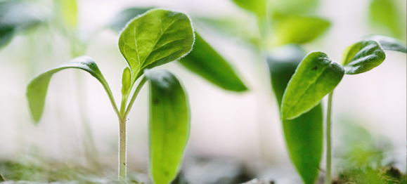 plants-growing