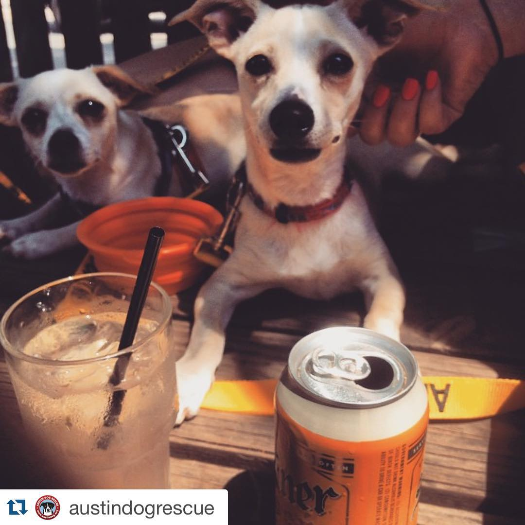 Exceptional Dogs Beer Definitive Guide To Dog Friendly Businesses Can Big Dogs Drink Beer Can Dogs Drink Beer Yahoo bark post Can Dogs Drink Beer