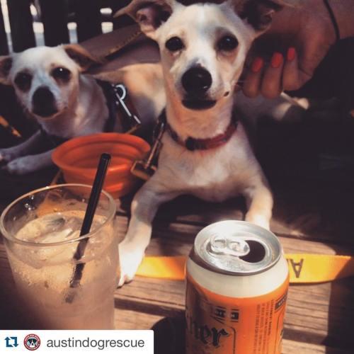 Medium Crop Of Can Dogs Drink Beer