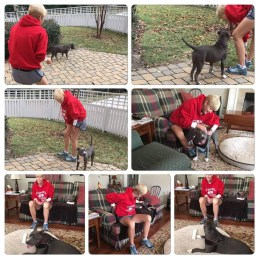 ADOPTED!! Pearl was in foster for the ACS when we were asked to pull her into Bully4You. I found a adopter and then pulled her... Happy ending. - Adopted!