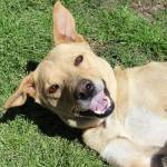 Wilma - ADOPTED!