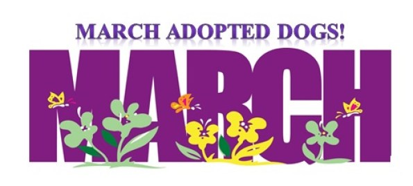 march adopted dogs