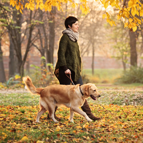 A girl and her dog walking in a park in autumn