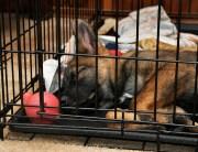 crate training puppy