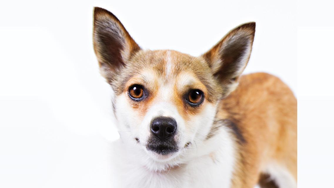 Dog Grooming Prices Calgary
