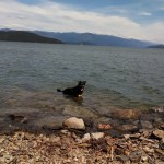 Dog Friendly Spots Sandpoint, Idaho