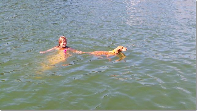swimming vizsla