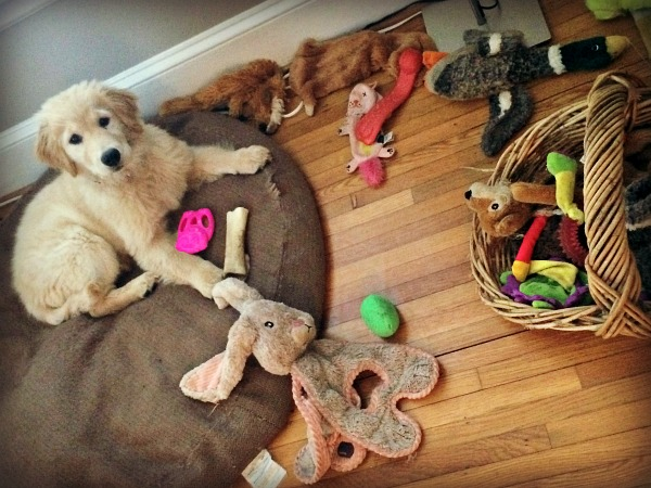 zoey toys