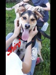 Shirò