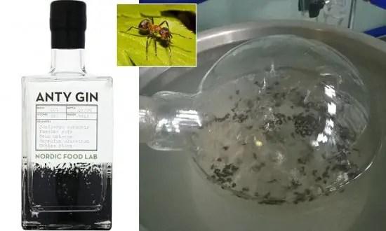 Anty-gin2-550x330
