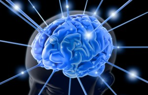 bigstockphoto_the_brain_1713803