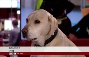 perro_bbc