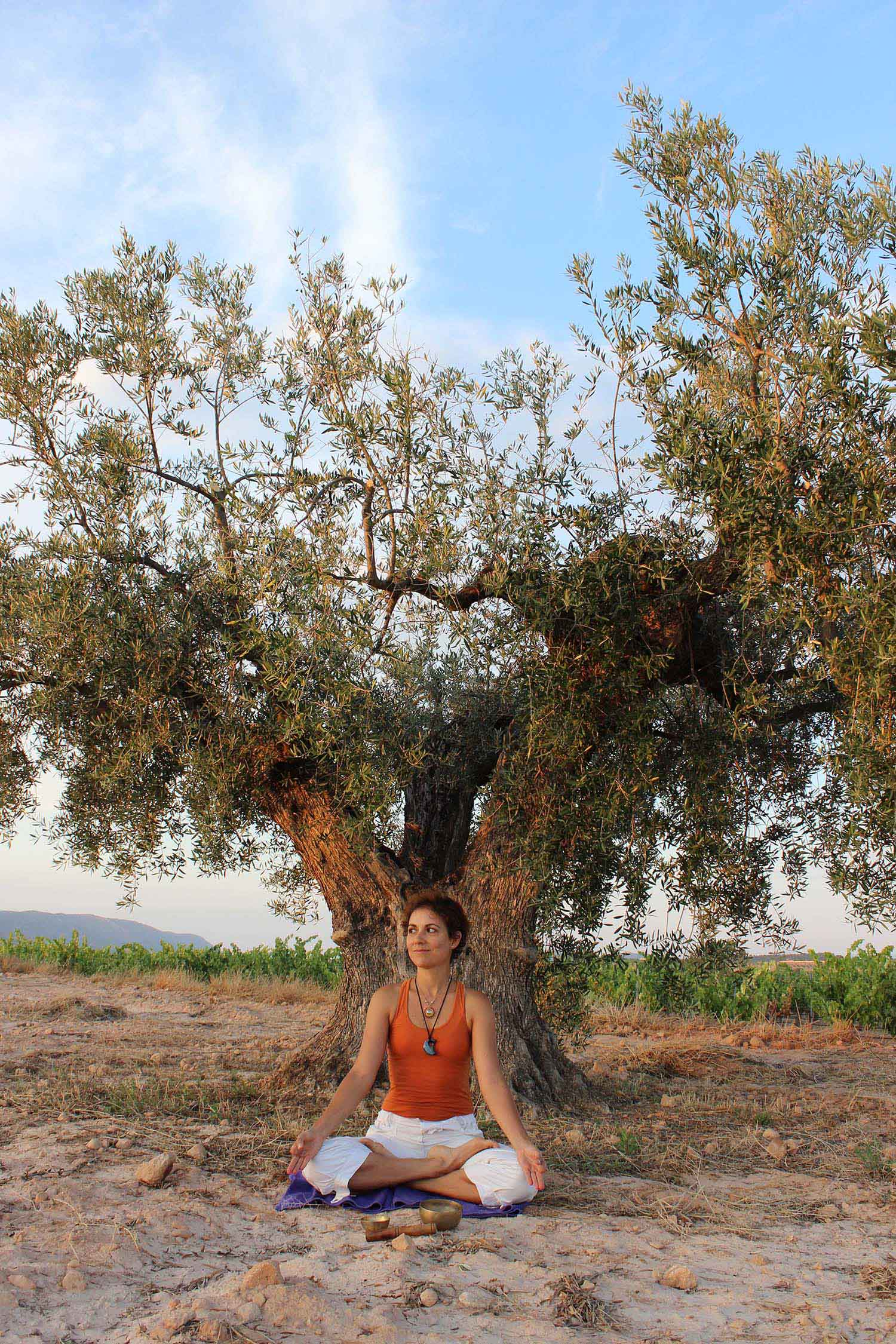 padmasana bajo el olivo