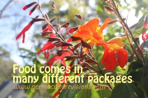 food comes in many different packages