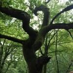 Dartmoor-Tree