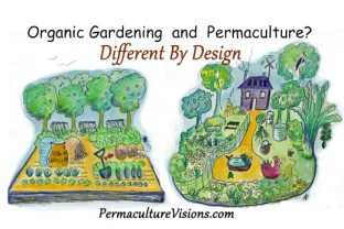 organic gardening and permaculture are different by design