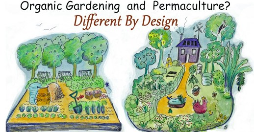 Difference Between Organic Gardening and Permaculture - Permaculture on garden designs zone 7, garden designs zone 6, garden designs zone 3,