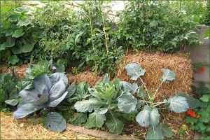 micro jardin 5