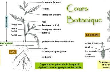 Cours Botanique PDF