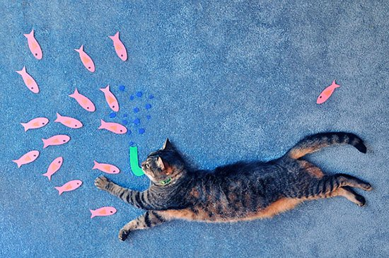 Creative Portraits of a Cat on the Ground cat1