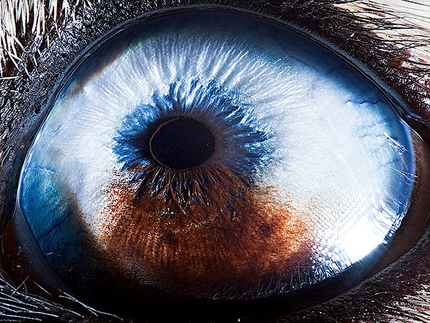Amazing Macro Photos of Animal Eyes eye2 mini