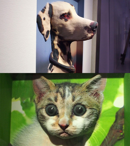 Casio Shows Off 2D to 3D Conversion Service, Creepy Pet Photos 2dto3d