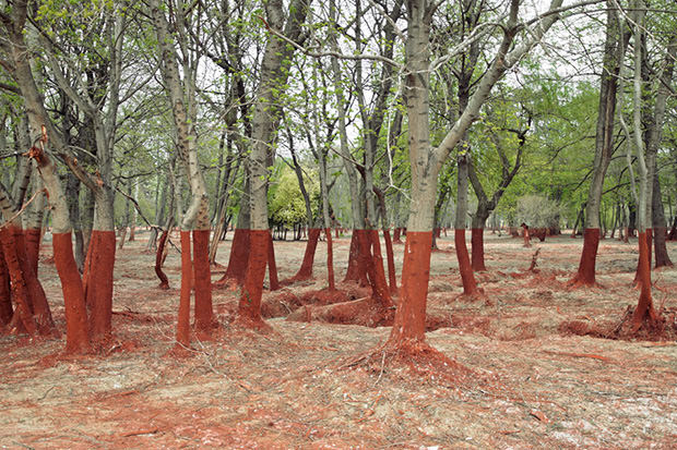 Stunning Photos of a Thick Red Line in the Aftermath of a Toxic Spill spill mini