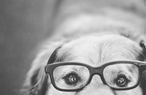 Teen Girl Shoots Beautiful and Creative Portraits of Her Pet Dogs dog11