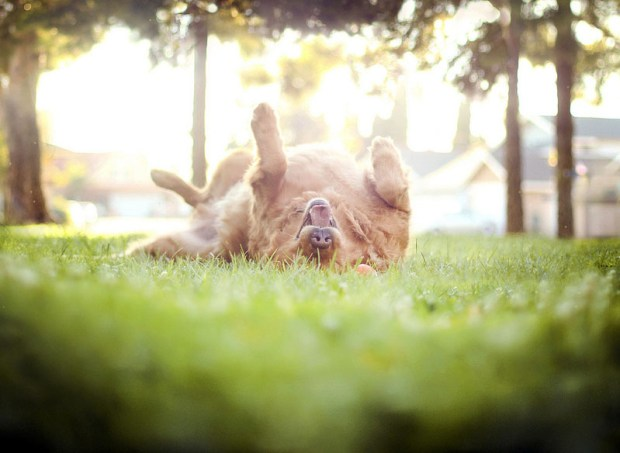 Teen Girl Shoots Beautiful and Creative Portraits of Her Pet Dogs dog3