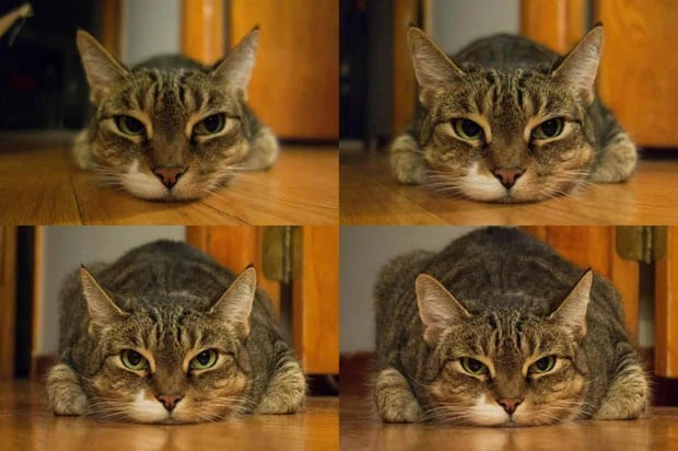 How Focal Length and Subject Distance Affect Weight... As Seen with a Cat catfocallengths