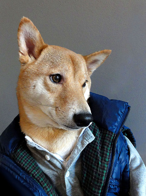 Menswear Dog Features Photos of Mens Fashion, Modeled by a Shiba Inu dogmenswear 10