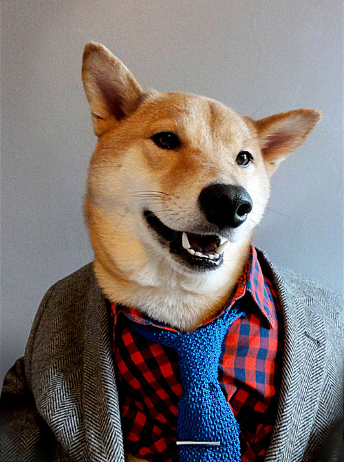 Menswear Dog Features Photos of Mens Fashion, Modeled by a Shiba Inu dogmenswear 11