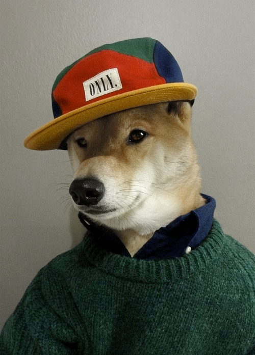 Menswear Dog Features Photos of Mens Fashion, Modeled by a Shiba Inu dogmenswear 5
