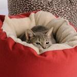 Dog Gone Cat Bed