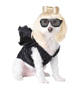lady-gaga-dog