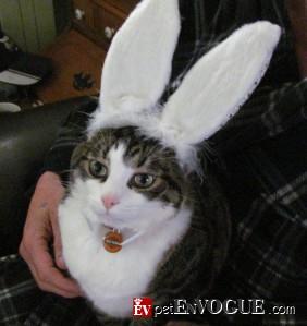 PussPuss