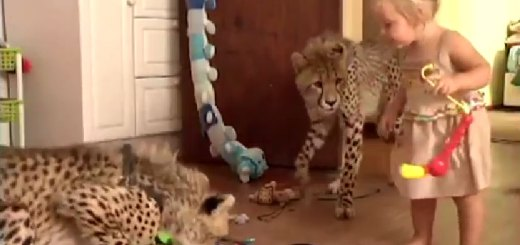 cheetah house with kids