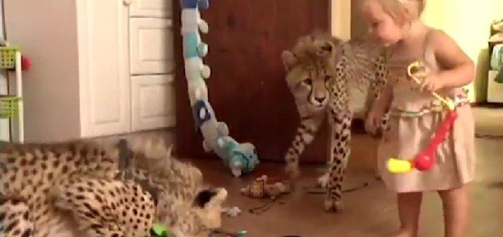 cheetah house with kids