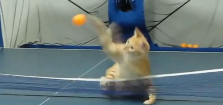 Funny Cat Friday 1