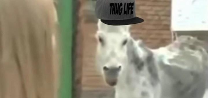 horsethug