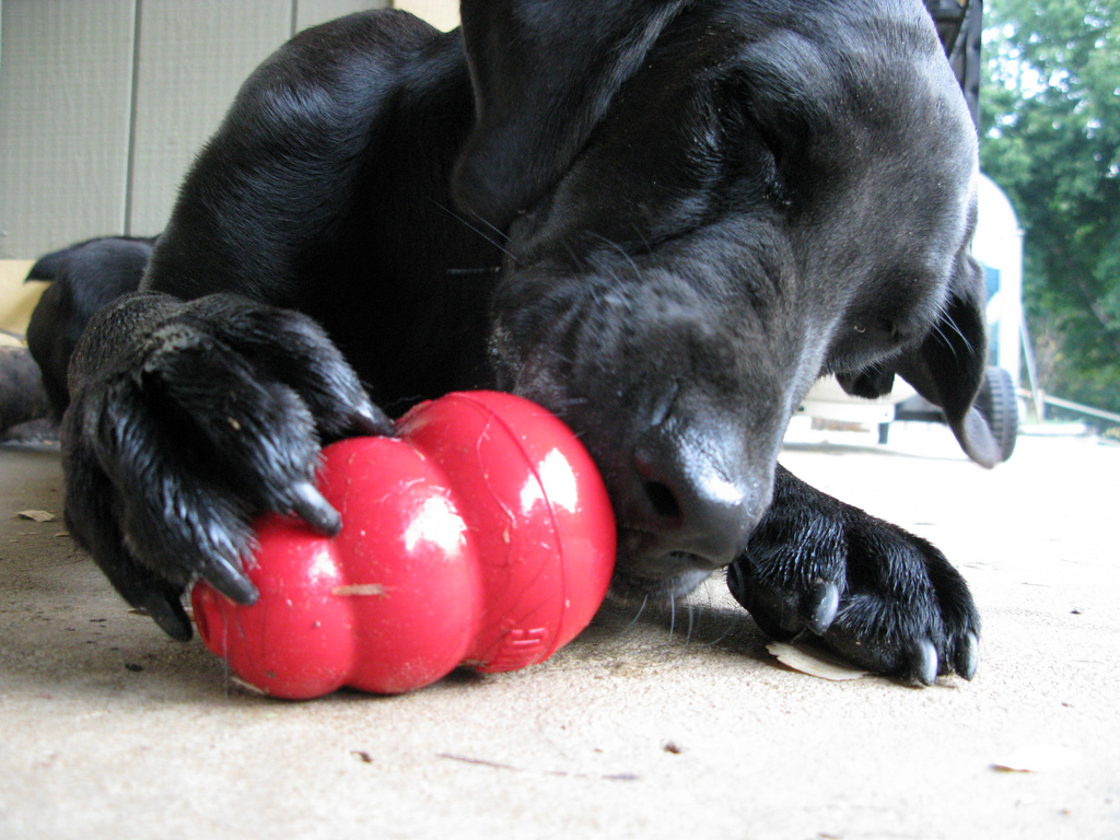 Fullsize Of Dog Toys For Aggressive Chewers