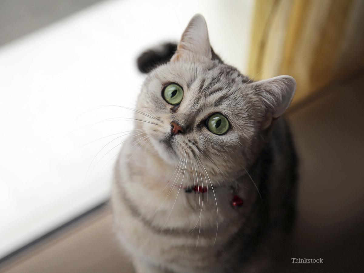 Fullsize Of Cat Has Bad Breath
