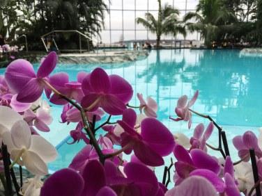 1.500 de fire de orhidee pe marginea piscinei principale.