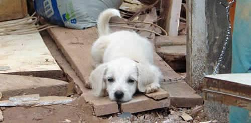 cachorro-abandonado-sem-dono