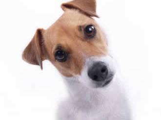pet-rede-cachorro-interrogacao