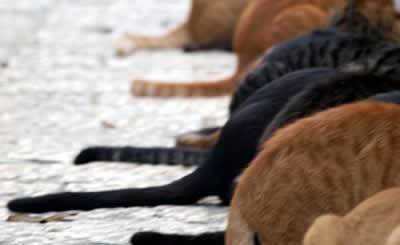 pet-rede-gatos-de-rua