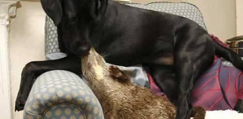 petrede-amizade-cadela-e-lontra